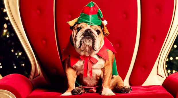 santa-photo-dog-westfields